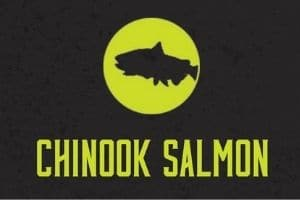 Chinook Salmon Graphic