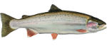 Steelhead Fish Icon